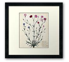 Vintage Botanical l Framed Print