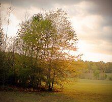 Shiloh Battlefield-0557449 by Michael Byerley
