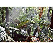 Wild Tasmania Photographic Print
