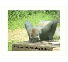 Communal Drinking Water Art Print