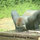 Communal Drinking Water by Thomas Murphy