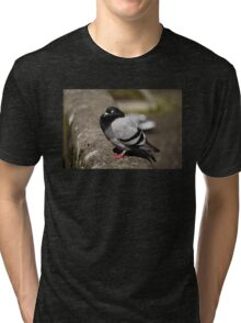 Sleeping pigeon Tri-blend T-Shirt