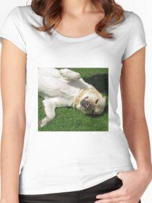 Meet Harvey - Cute K9 Women's Fitted Scoop T-Shirt