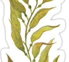 watercolour kelp Sticker