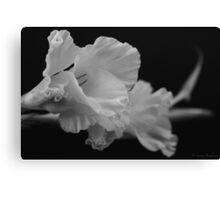 Black and White Gladiolus Canvas Print