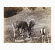 A Dear Picture - John Grabill - 1891 Kids Tee