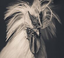 I feel...pfffft...pretty. by alan shapiro