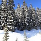 Snow Trees by Eric Glaser
