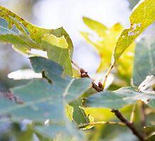 Summer Leaves by Kendra Kantor