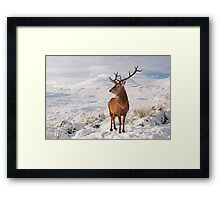 Deer Stag in the snow Framed Print
