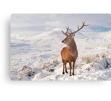 Deer Stag in the snow Metal Print