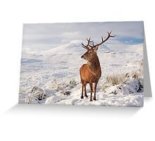 Deer Stag in the snow Greeting Card
