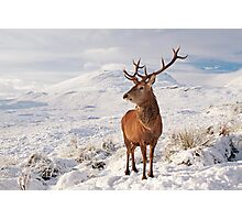 Deer Stag in the snow Photographic Print