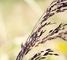 Purple by Kendra Kantor