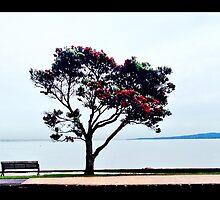 Pohutakawa tree, New Zealand by Janine Barr