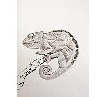 Chameleon in ink Photographic Print