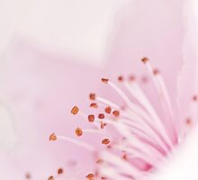 Blossom by Sandy  Taylor Photography