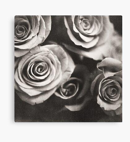 Medium format analog black and white photo of white rose flowers Canvas Print