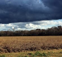 Low Clouds Over Soybean Field Sticker