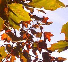 Under Autumn Sticker