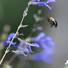 Bee in the Mid Air by TJ Baccari Photography