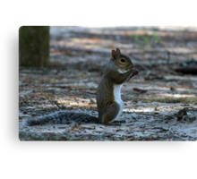 Little Squirrel Canvas Print