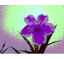 violet daisy pop Photographic Print