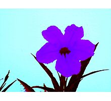 pop flower sapphire blue on turquoise  Photographic Print