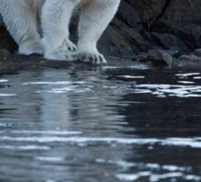 Ours polaire - Polar Bear Sticker