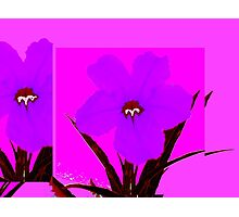 pop flower violet blue Photographic Print