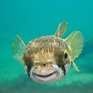 Globe Fish by Werner Padarin