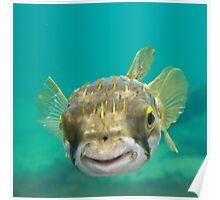 Globe Fish Poster