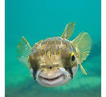 Globe Fish Photographic Print
