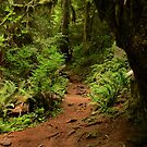 A Trail in the Woods by Barbara  Brown