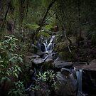 Olinda Falls by Andrew Wilson