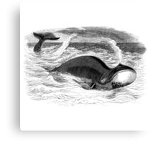 Vintage Whale Swimming and Blowin' Canvas Print