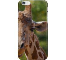 Giraffe at Denver Zoo iPhone Case/Skin