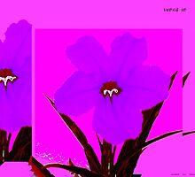 flower dark orchid on magenta by davidius