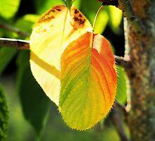 Tinges Of Autumn by Susie Peek