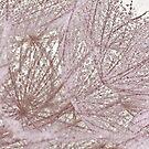 Miss Dandelions Cousin - Soft Macro by Sandra Foster