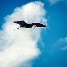 Great Frigatebird over Genevosa by Yukondick