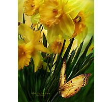 Daffodils - First Flower Of Spring Photographic Print