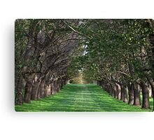Trees - Country Victoria - Healesville Canvas Print