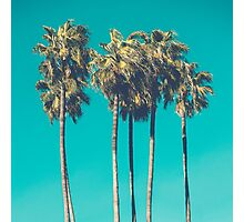 Palm Trees Photographic Print