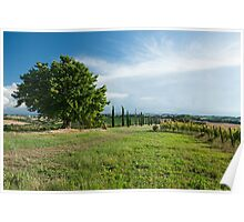 Panoramic view of vineyard and fields Poster