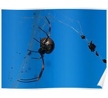 a spider and her dinner ...  Poster