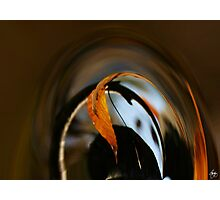 Beech Leaf Abstract Photographic Print