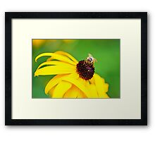 Bumble Bee on a Yellow Flower Framed Print