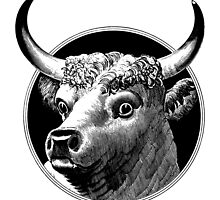 Who me? Cattle Head - woodcut style by cartoon