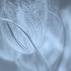 Wispy #5 by Laurie Minor